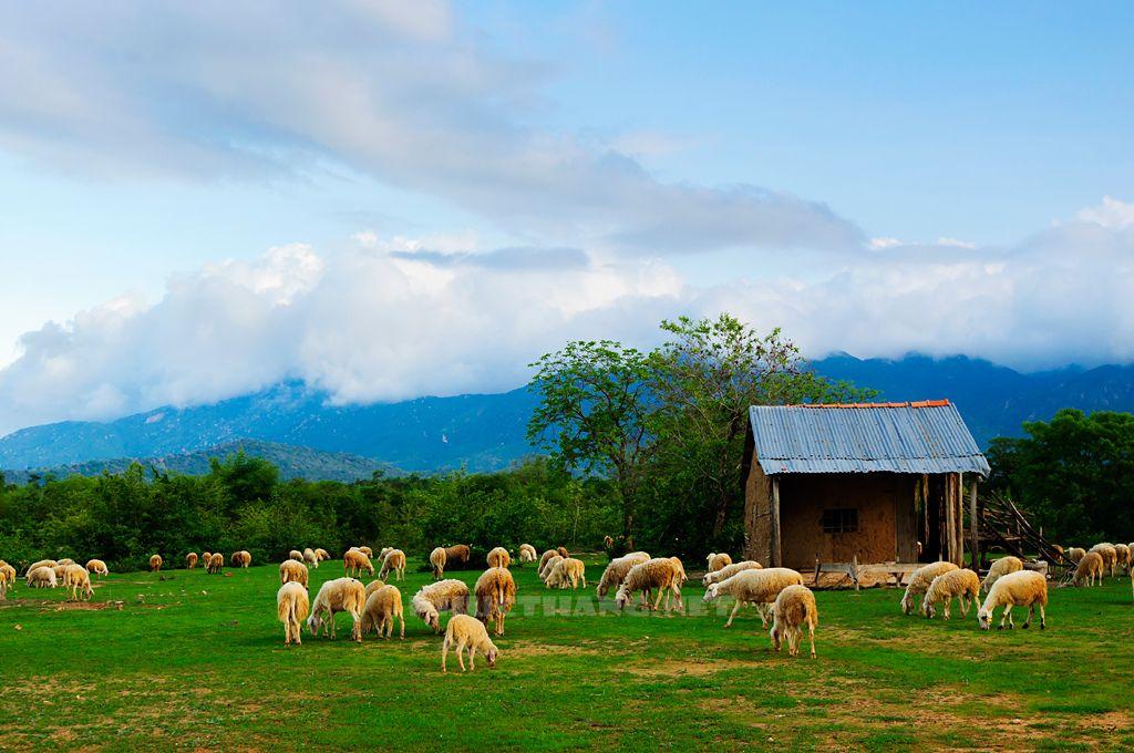 Bán nhớt Liqui Moly giá rẻ tại Ninh Thuận
